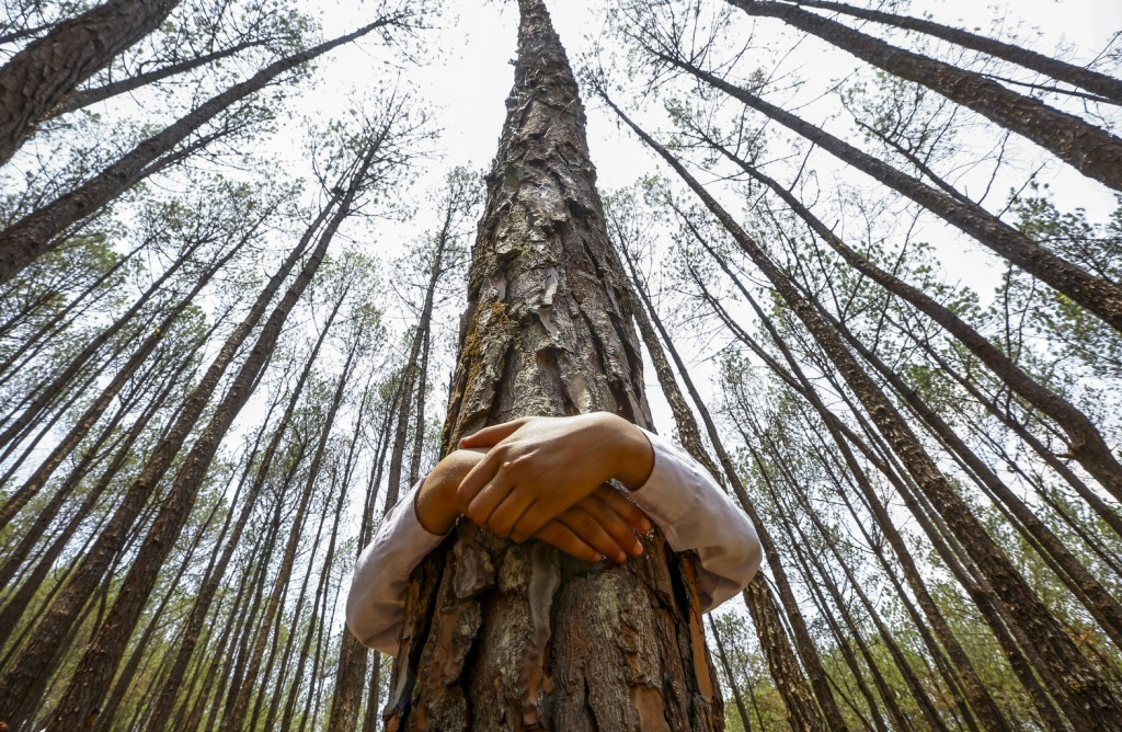 A Nepalese man hugs a tree while celebrating World Environment Day at the forest of Gokarna, on the outskirts of Kathmandu, Nepal, in this 2014 photo. Photo: CNS photo/Narendra Shrestha, EPA