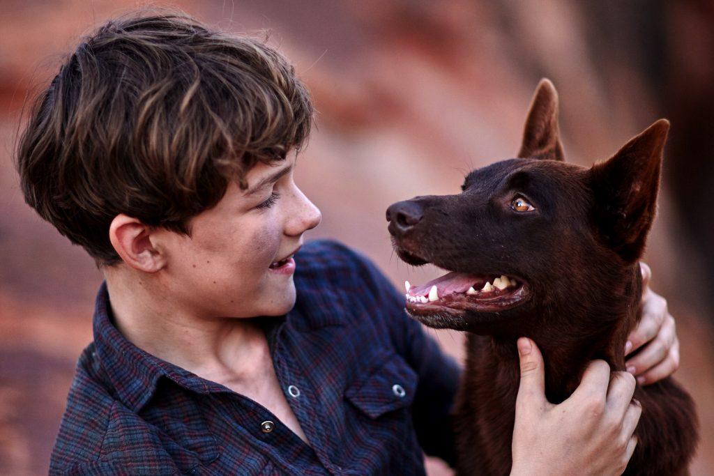 Mick (Levi Miller) hugs his new best friend Blue (Phoenix) in Red Dog: True Blue. Photo: Supplied