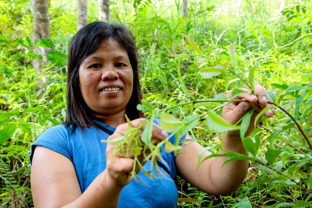 Tati in part of her communities preserved forest collecting belinjo leaves used for cooking soup. Photo Richard Wainwright/Caritas Australia.