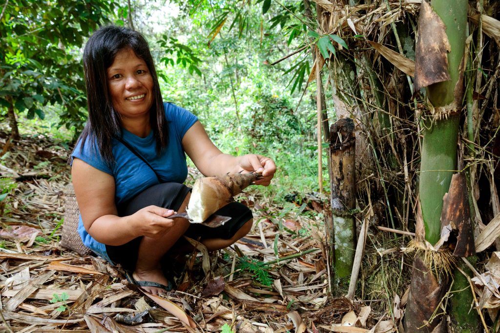 Tati in part of her community's preserved forest collecting rebung, a young bamboo vegetable used for cooking. Photo: Richard Wainwright/Caritas Australia.