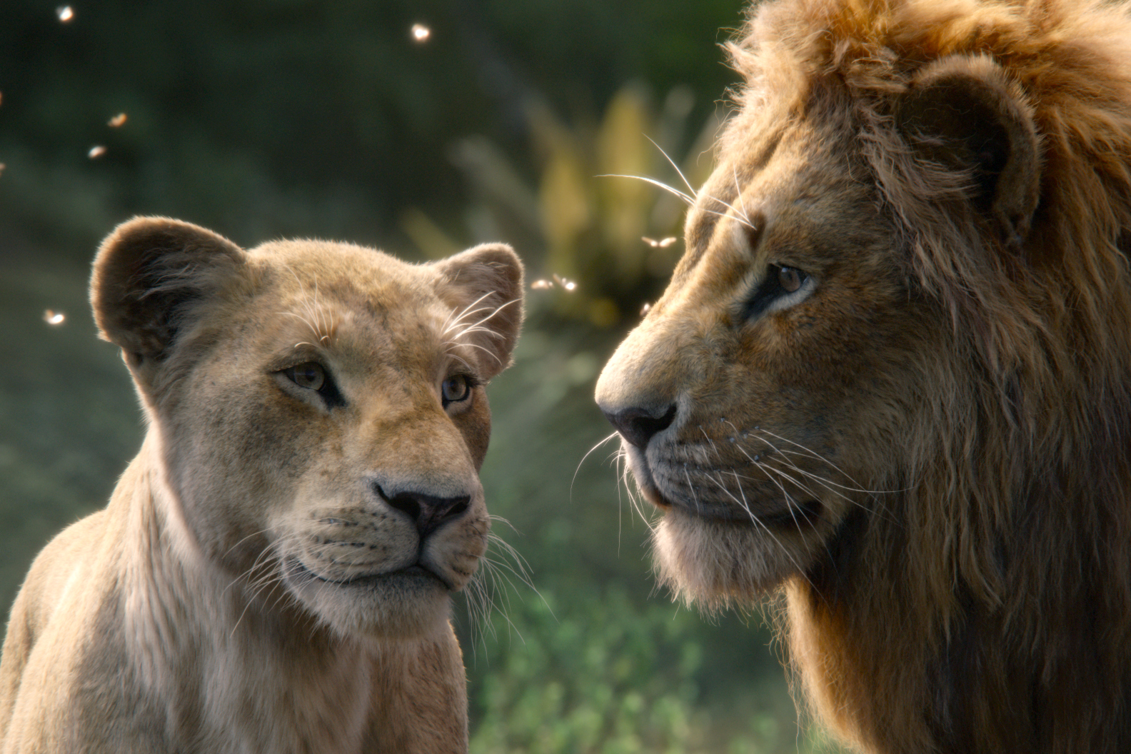 "The characters Nala (voiced by Beyonce Knowles-Carter) and Simba (voiced by Donald Glover) appear in the movie ""The Lion King"". Photo: Disney/CNS."
